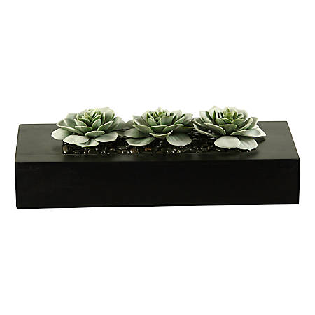 """Realspace™ 8"""" Frosted Succulent Plant With Wooden Tray, Black/Green"""