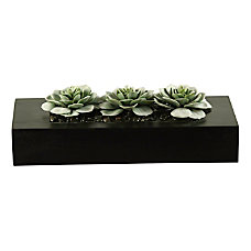 Realspace 8 Frosted Succulent Plant With