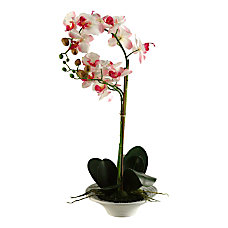 Realspace 20 Orchid Plant With Ceramic