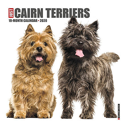 """Willow Creek Press Animals Monthly Wall Calendar, 12"""" x 12"""", Cairn Terriers, January To December 2020"""