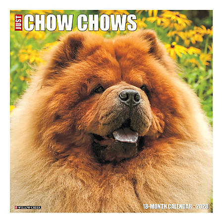 "Willow Creek Press Animals Monthly Wall Calendar, 12"" x 12"", Chow Chows, January To December 2020"