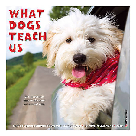 "Willow Creek Press Animals Monthly Wall Calendar, 12"" x 12"", What Dogs Teach Us, January To December 2020"