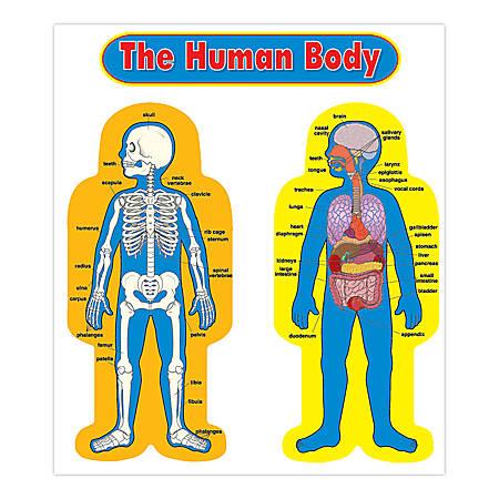 Carson-Dellosa Curriculum Bulletin Board Set — Child-Size Human Body