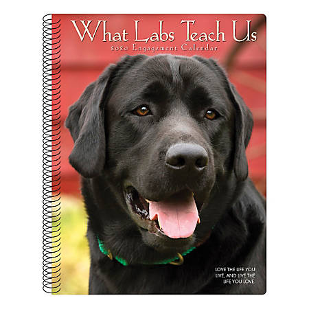 "Willow Creek Press Weekly Engagement Calendar, 7"" x 9"", What Labs Teach Us, January to December 2020, 09352"