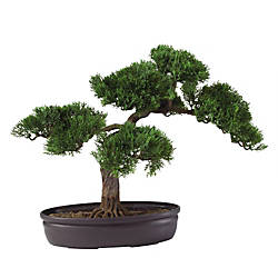 Nearly Natural 16 Cedar Bonsai Plant