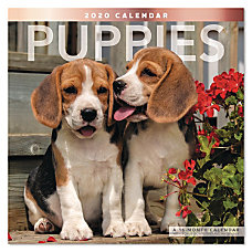Mead Puppies Monthly Wall Calendar 12