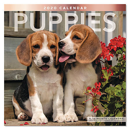 """Mead® Puppies Monthly Wall Calendar, 12"""" x 12"""", January To December 2020, ODE10010"""