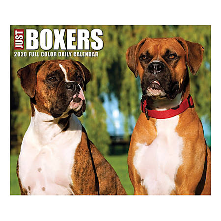 """Willow Creek Press Page-A-Day Daily Desk Calendar, Just Boxers, 5-1/2"""" x 6-1/4"""", January to December 2020, 08782"""