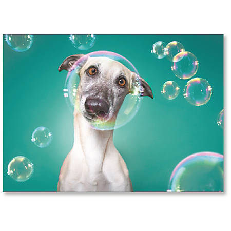 """Viabella Blank Note Greeting Card, Dog, 5"""" x 7"""", Multicolor"""