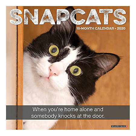 """Willow Creek Press Animals Monthly Wall Calendar, 12"""" x 12"""", Snapcats, January To December 2020"""