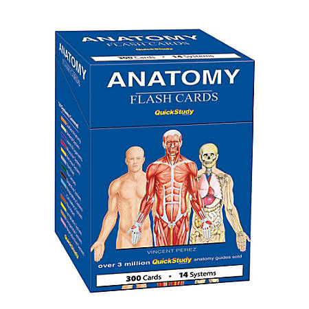 """QuickStudy Flash Cards, 4"""" x 3-1/2"""", Human Anatomy, Pack Of 300 Cards"""