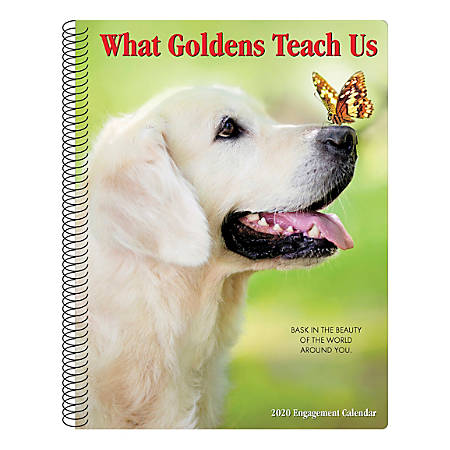 """Willow Creek Press Weekly Engagement Calendar, 7"""" x 9"""", What Goldens Teach Us, January to December 2020, 09338"""