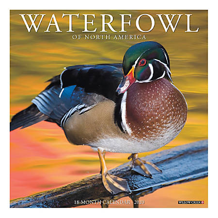 "Willow Creek Press Animals Monthly Wall Calendar, 12"" x 12"", Waterfowl, January To December 2020"