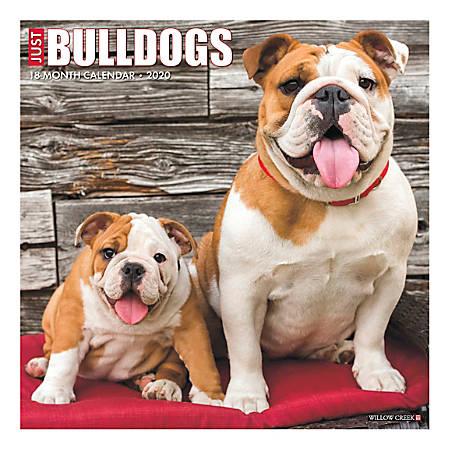 "Willow Creek Press Animals Monthly Wall Calendar, 12"" x 12"", Bulldogs, January To December 2020"