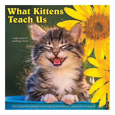 """Willow Creek Press Animals Monthly Wall Calendar, 12"""" x 12"""", What Kittens Teach Us, January To December 2020"""