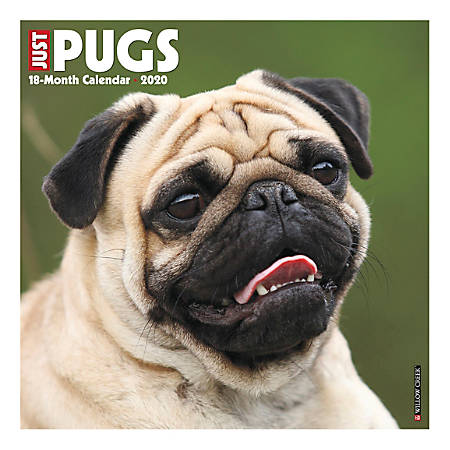 "Willow Creek Press Animals Monthly Wall Calendar, 12"" x 12"", Pugs, January To December 2020"