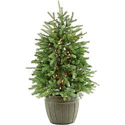 Fraser Potted Pine Tree With Clear