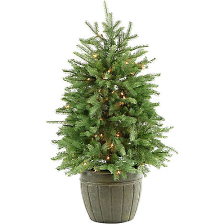 Fraser Potted Pine Tree With Clear Lights, 4', Green