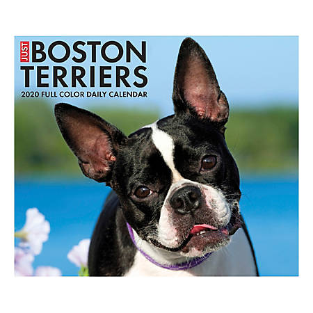 "Willow Creek Press Page-A-Day Daily Desk Calendar, Just Boston Terriers, 5-1/2"" x 6-1/4"", January to December 2020, 08775"