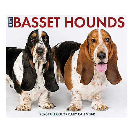 """Willow Creek Press Page-A-Day Daily Desk Calendar, Just Basset Hounds, 5-1/2"""" x 6-1/4"""", January to December 2020, 08744"""