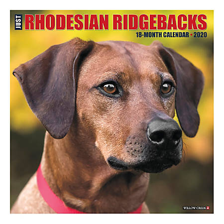 "Willow Creek Press Animals Monthly Wall Calendar, 12"" x 12"", Rhodesian Ridgebacks, January To December 2020"