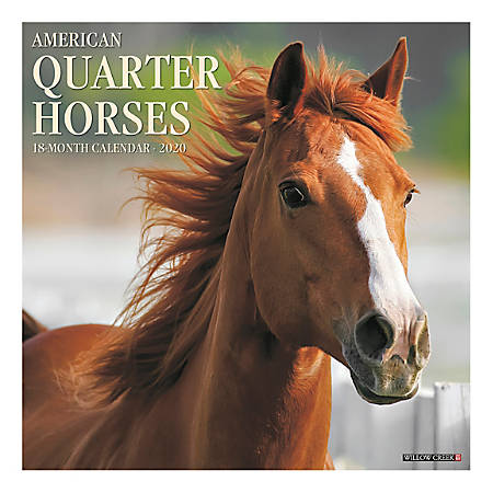 """Willow Creek Press Animals Monthly Wall Calendar, 12"""" x 12"""", American Quarter Horses, January To December 2020"""