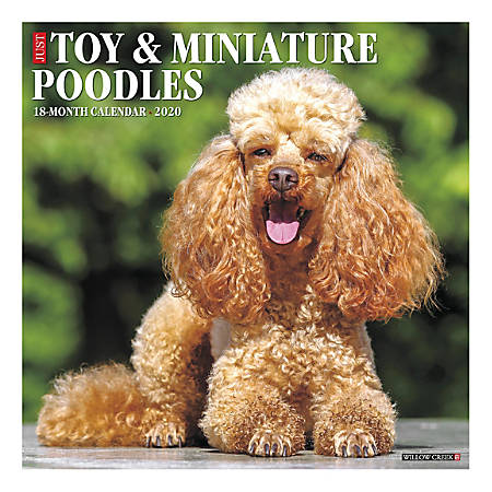 "Willow Creek Press Animals Monthly Wall Calendar, 12"" x 12"", Toy & Miniature Poodles, January To December 2020"