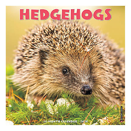 """Willow Creek Press Animals Monthly Wall Calendar, 12"""" x 12"""", Hedgehogs, January To December 2020"""