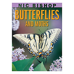 Scholastic Butterflies And Moths
