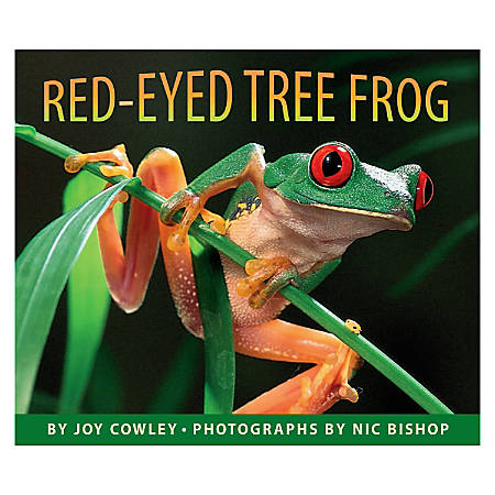 Scholastic Red-Eyed Tree Frog