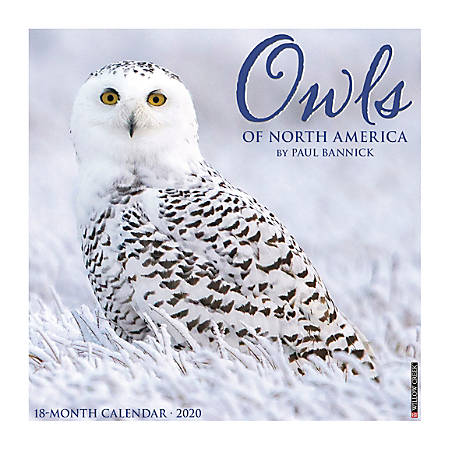 """Willow Creek Press Animals Monthly Wall Calendar, 12"""" x 12"""", Owls, January To December 2020"""