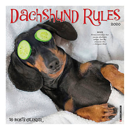 """Willow Creek Press Animals Monthly Wall Calendar, 12"""" x 12"""", Dachshund Rules, January To December 2020"""