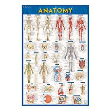 QuickStudy Human Anatomical Poster English 28