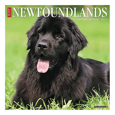 "Willow Creek Press Animals Monthly Wall Calendar, 12"" x 12"", Newfoundlands, January To December 2020"