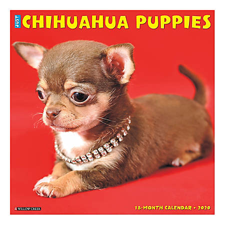 "Willow Creek Press Animals Monthly Wall Calendar, 12"" x 12"", Chihuahua Puppies, January To December 2020"