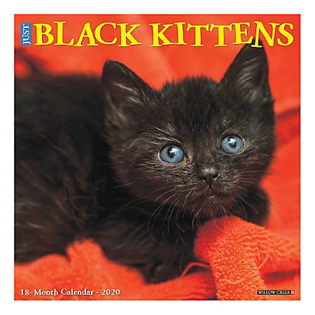 "Willow Creek Press Animals Monthly Wall Calendar, 12"" x 12"", Black Kittens, January To December 2020"