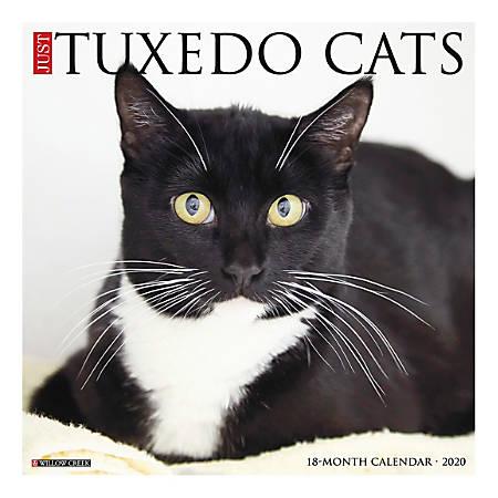 "Willow Creek Press Animals Monthly Wall Calendar, 12"" x 12"", Tuxedo Cats, January To December 2020"
