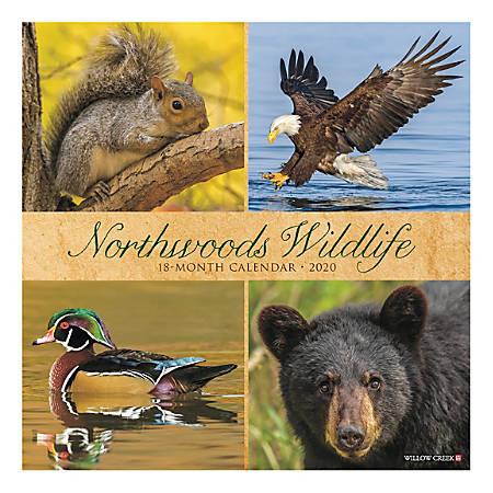 "Willow Creek Press Animals Monthly Wall Calendar, 12"" x 12"", Northwoods Wildlife, January To December 2020"