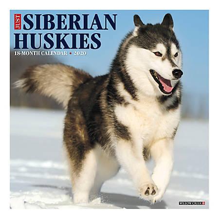 "Willow Creek Press Animals Monthly Wall Calendar, 12"" x 12"", Siberian Huskies, January To December 2020"