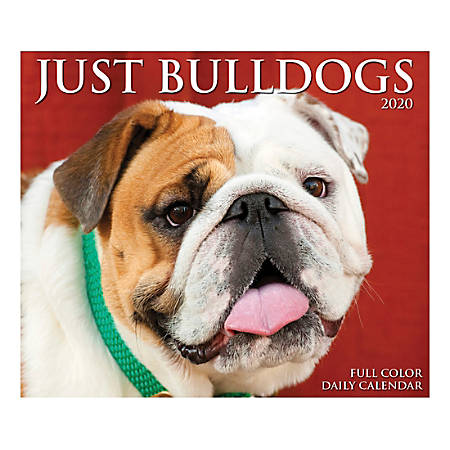 """Willow Creek Press Page-A-Day Daily Desk Calendar, Just Bulldogs, 5-1/2"""" x 6-1/4"""", January to December 2020, 08799"""