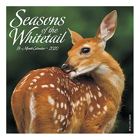 "Willow Creek Press Animals Monthly Wall Calendar, 12"" x 12"", Seasons Of The Whitetail, January To December 2020"