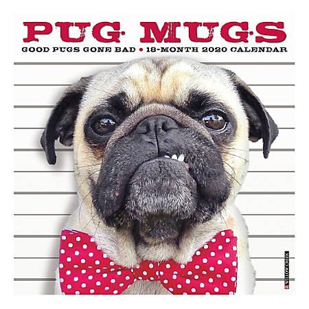"Willow Creek Press Animals Monthly Wall Calendar, 12"" x 12"", Pug Mugs, January To December 2020"