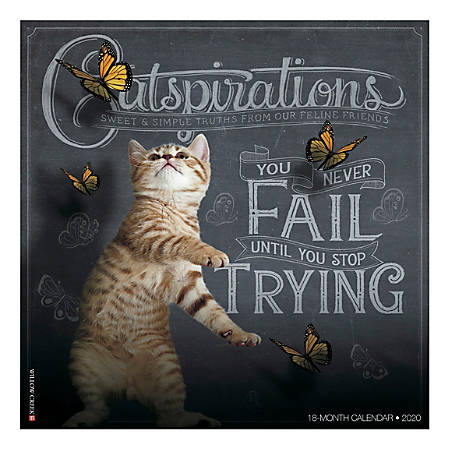 """Willow Creek Press Animals Monthly Wall Calendar, 12"""" x 12"""", Catspirations, January To December 2020"""