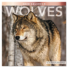 Mead Wolves Monthly Wall Calendar 12