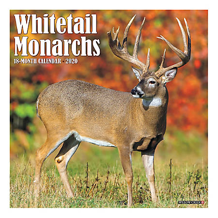 """Willow Creek Press Animals Monthly Wall Calendar, 12"""" x 12"""", Whitetail Monarchs, January To December 2020"""