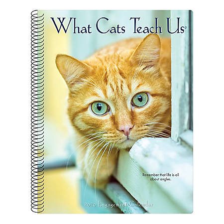 """Willow Creek Press Weekly Engagement Calendar, 7"""" x 9"""", What Cats Teach Us, January to December 2020, 09314"""