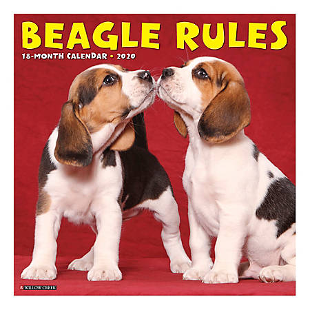 "Willow Creek Press Animals Monthly Wall Calendar, 12"" x 12"", Beagle Rules, January To December 2020"