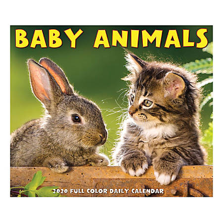 """Willow Creek Press Page-A-Day Daily Desk Calendar, Baby Animals, 5-1/2"""" x 6-1/4"""", January to December 2020, 08713"""