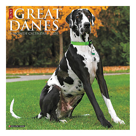"""Willow Creek Press Animals Monthly Wall Calendar, 12"""" x 12"""", Great Danes, January To December 2020"""