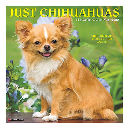 """Willow Creek Press Animals Monthly Wall Calendar, 12"""" x 12"""", Chihuahuas, January To December 2020"""